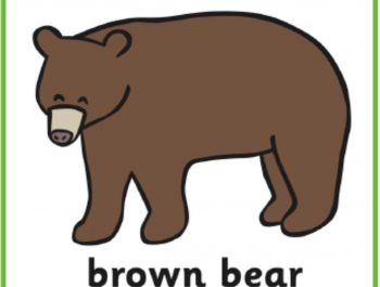 Brown bear facts