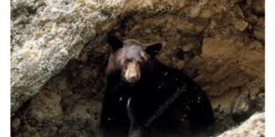 Can you make a bear cave?